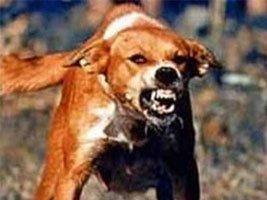 Obowiązkowe szczepienie psów